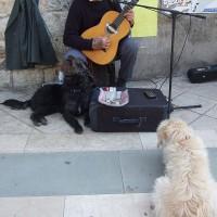 黒い犬とおじさんのデオ、白い犬はお母さん犬