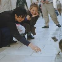 城壁内の猫たちはみんなゆったりとステキにしている(2)