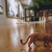 そこのショップで「ヒョウ」を一頭見つけた。 私の絵の中にも何度か描いているので興味有 我家のギャラリー内で放し飼い!