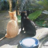 兄弟猫の仲良し日向ぼっこ