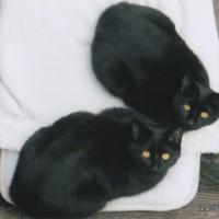 外猫のヨッシーとラッシー