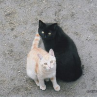 ヨッシーとキンタロ