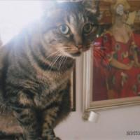 キララは私の絵のモデルで大活躍してくれます。