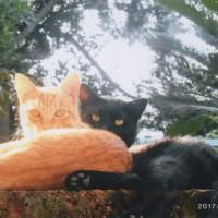ヨッシーとキンタは兄弟で仲良し。