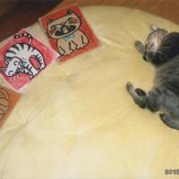 我家の猫ちゃんのイラストカードと(左から)「クルミ」「ソララ」「キララ」とキララ