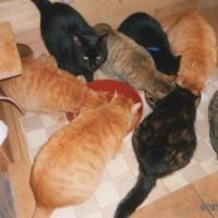 シェアハウスの猫たちの食事風景