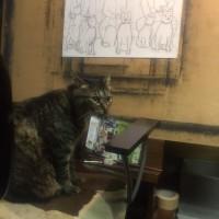 私が アトリエに入ると必ずキララは来ます。猫は その時に一番心地よい場所を知っています。